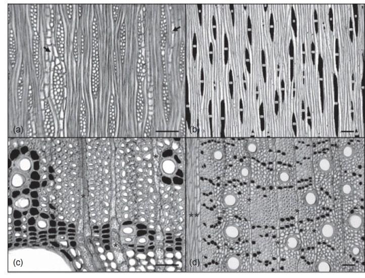 تصاویر مسکروسکوپ نوری تخمین نسبت پارانشیم